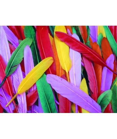 Plumas indios colores - 240 unidades