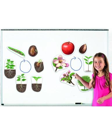 Ciclos de la vida vegetal- 12 piezas